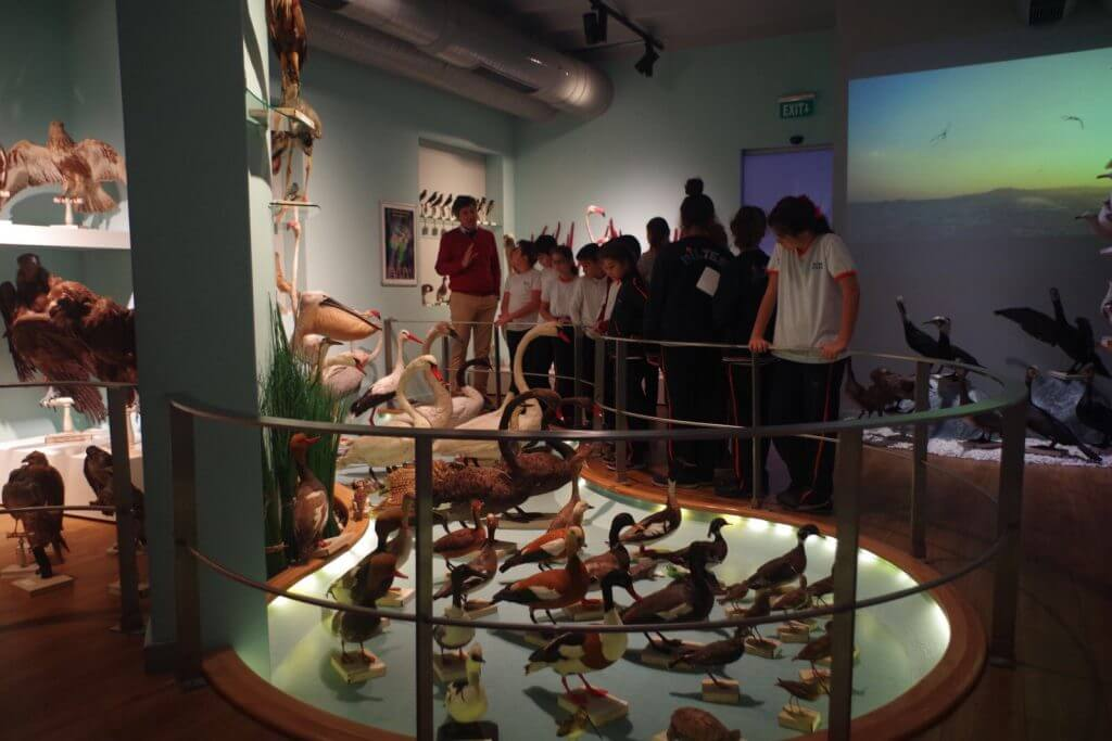 5. Sınıf Öğrencilerimiz Doğa Bilimleri Müzesini Gezdiler